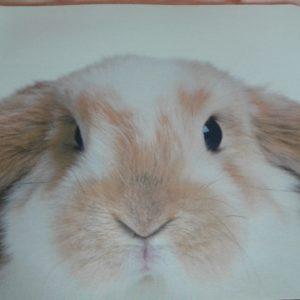 Kaninchen_Mousepad