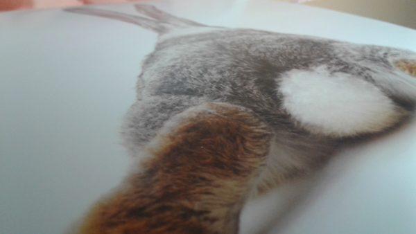 Kaninchen_Poster