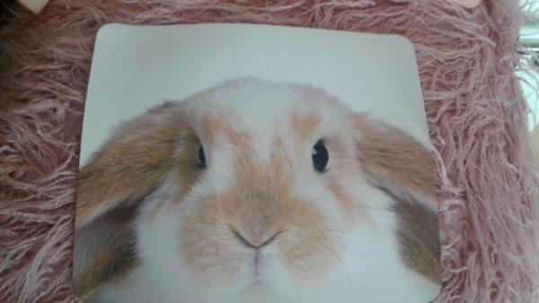 Kaninchen_Mousepad Widder